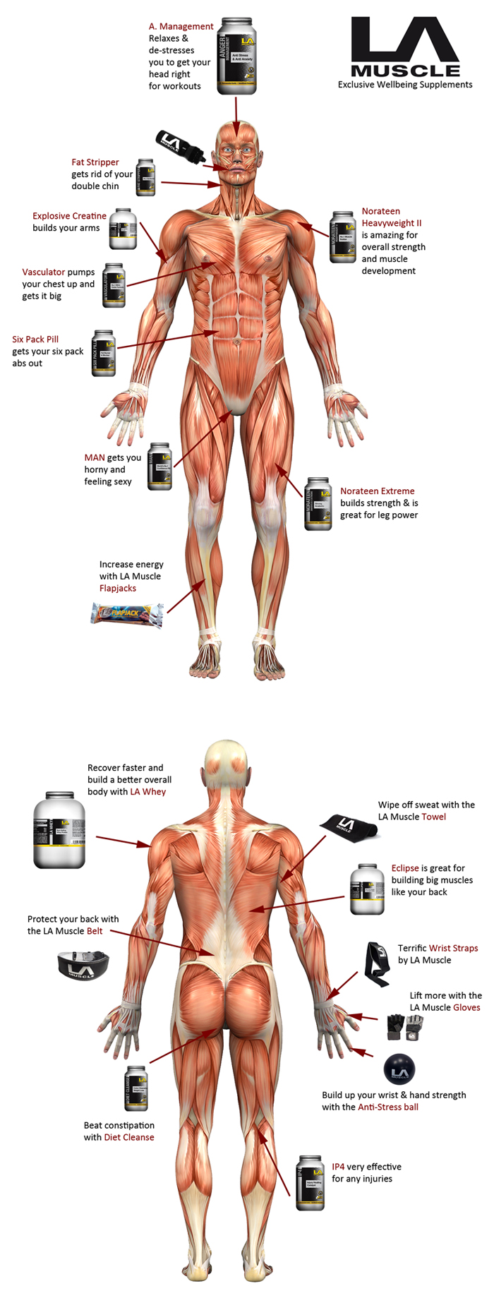 Which supplement is good for which body part? LA Muscle