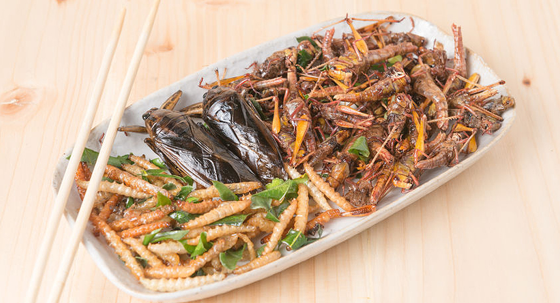 Will you be eating BUG PROTEIN?