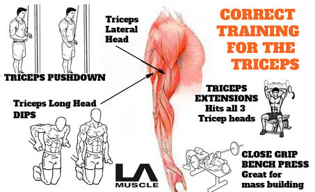 Training the triceps